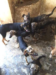 Street dogs of Morocco