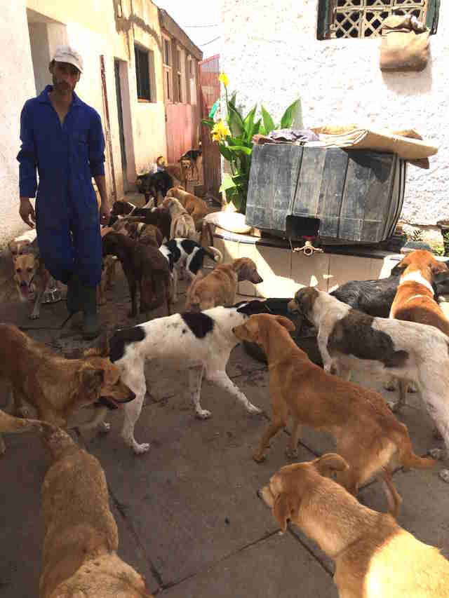 Street dogs in Morocco