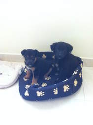 Puppies adopted from streets of Morocco
