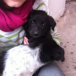 Street puppy rescued in Morocco