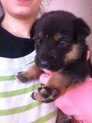Puppy saved from streets of Rabat