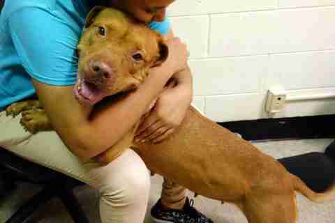 Shelter dog getting a hug