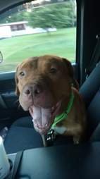 Rescue dog in car