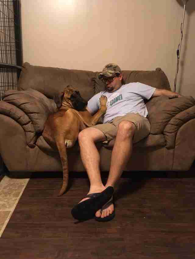 Dog on couch with man