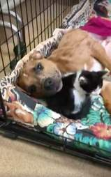Dog and cat comfort each other at vet