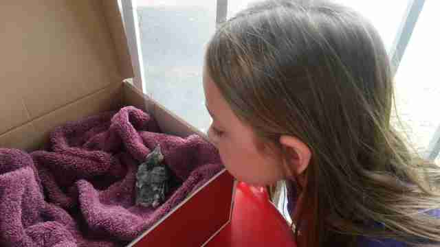 blue jay rescue