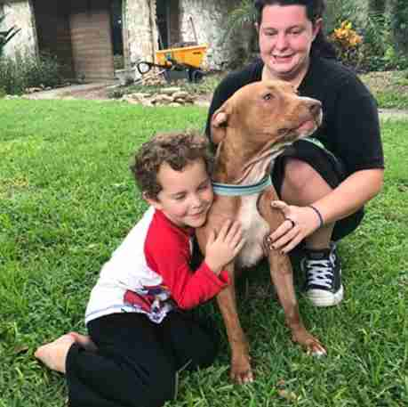pit bulls save kids from snake