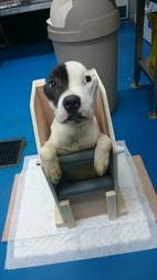 dog eats in a highchair