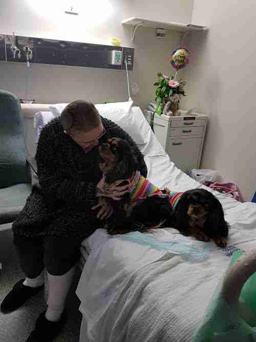 Therapy dogs with woman in hospital