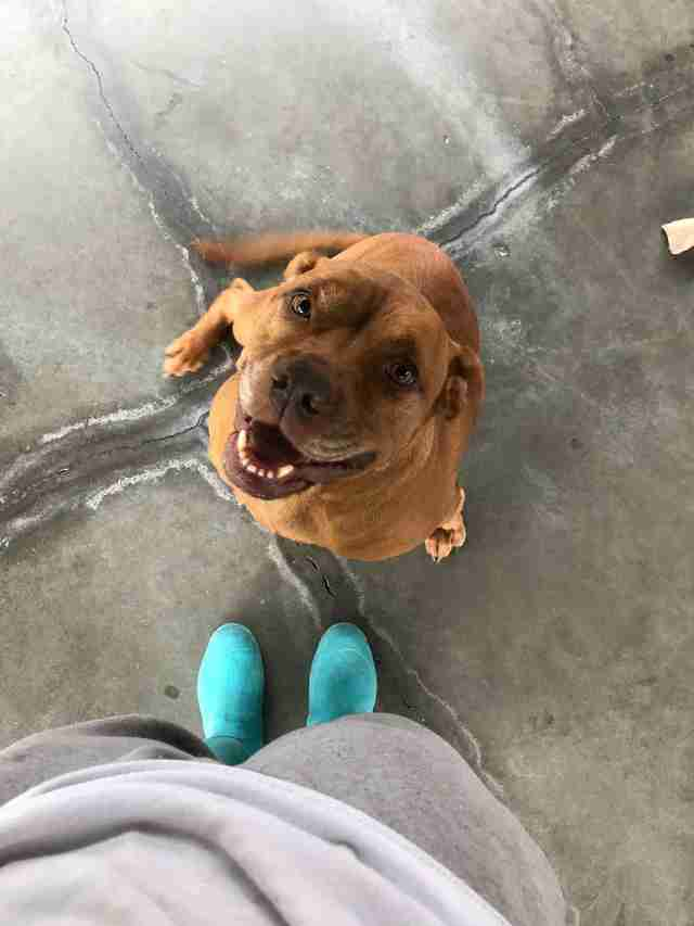 shelter dog smiling