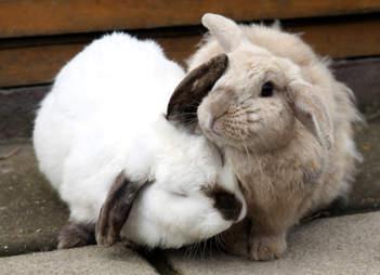 bunny best friends