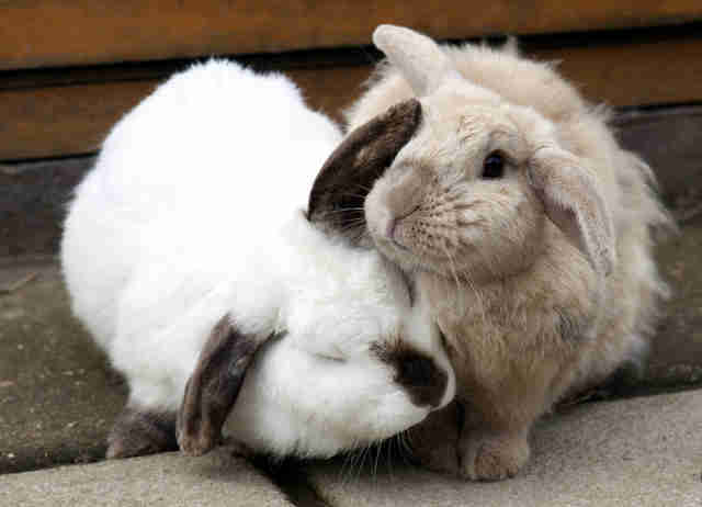 bunny best friends