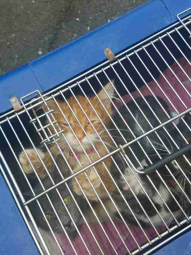 Kittens abandoned in crate