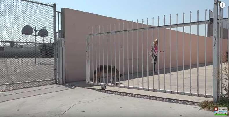 abandoned senior dog