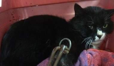 Cat caught in kill trap