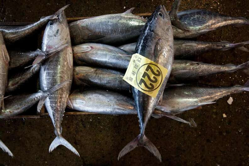 Juvenile bluefin tuna for sale at market