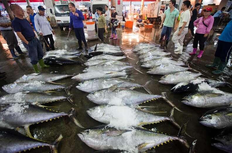 Bluefin tunas at Asian market