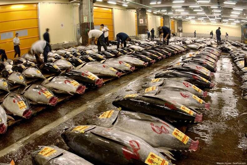 Bluefin tuna for sale in Japan