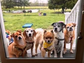 dogs looking in backdoor