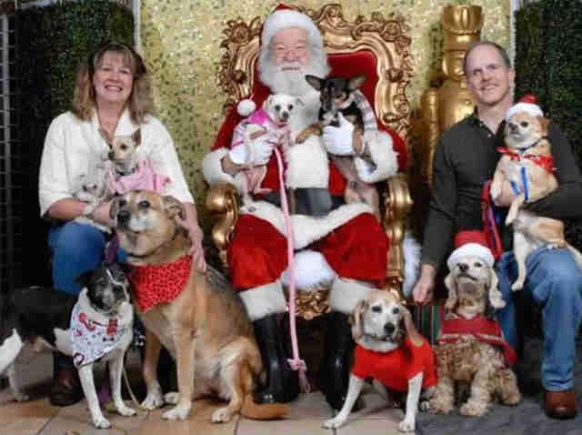 dogs posing for santa