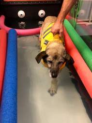 dog doing hydrotherapy