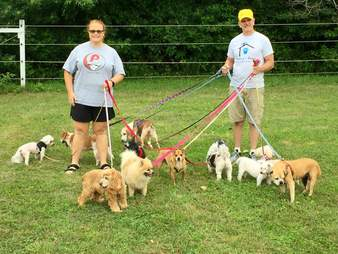 people holding dogs on leashes in a park