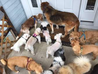 group of dogs waiting to be let inside