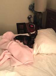 Rescue dog sleeping on bed