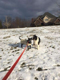 dog visits his friend every day