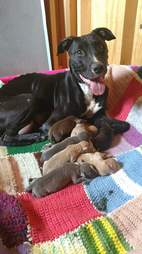 Dog dumped by breeder with her nine puppies