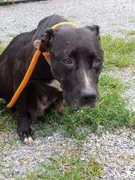 Pregnant dog dumped by breeder