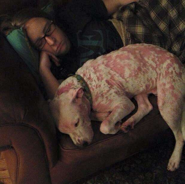 Dog with mange on couch