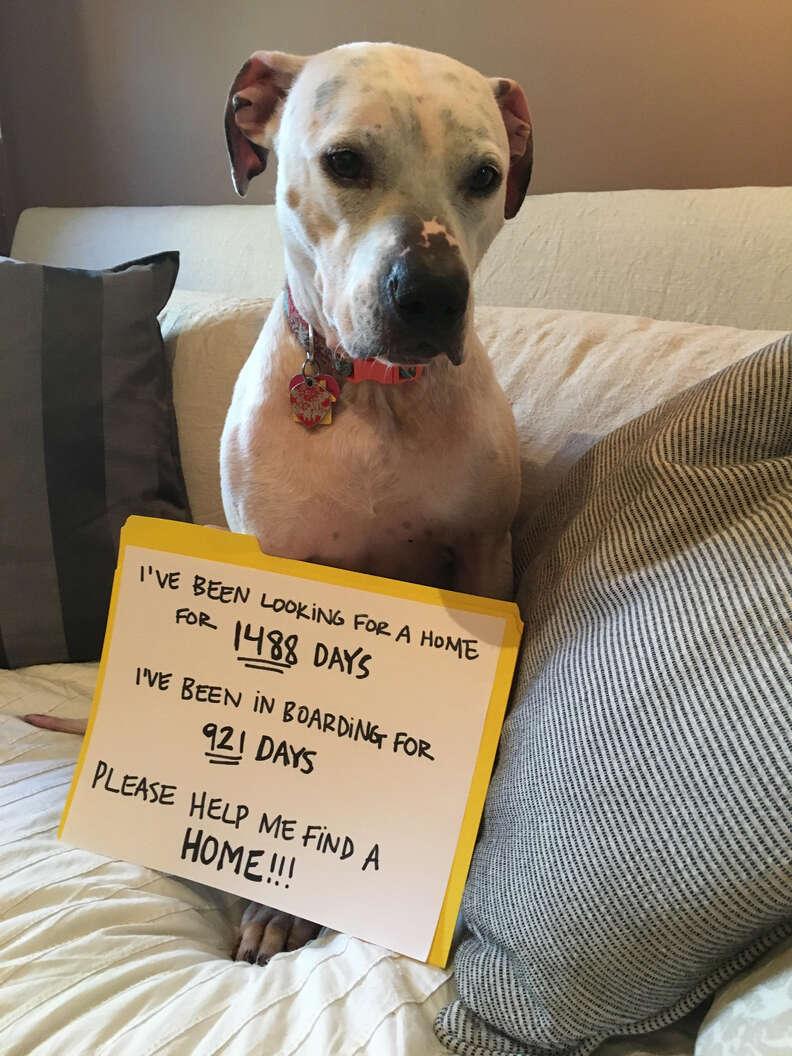 Shelter dog who needs home