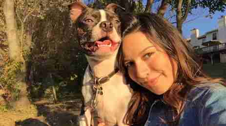 boston terrier reunites owner