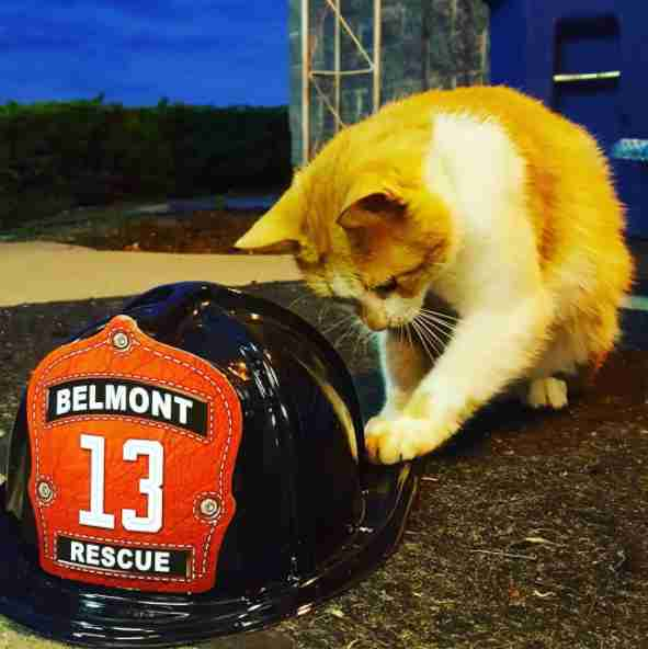 Cat pawing at firefighter hat