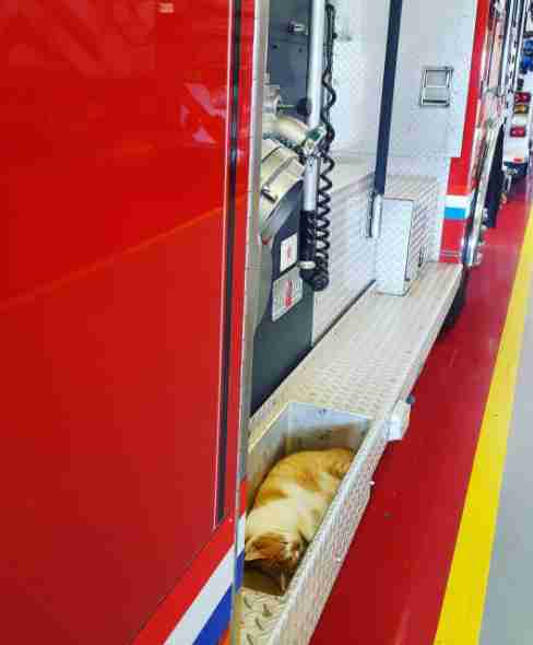 Rescue cat sleeping on fire truck