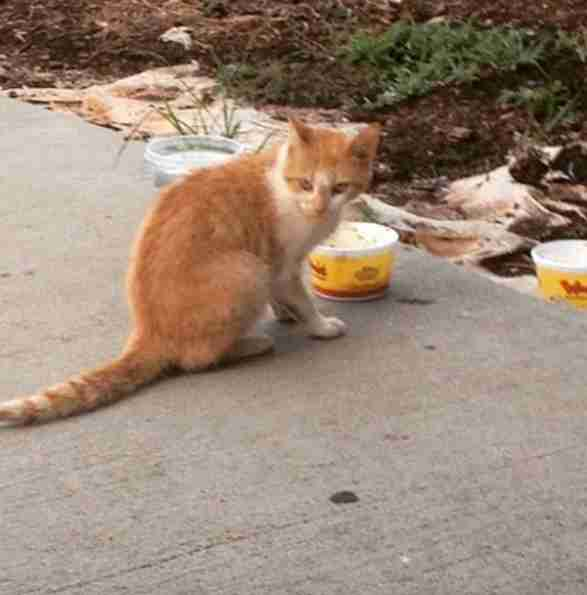 Stray cat eating