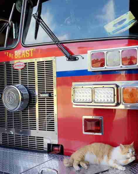 Rescue cat lying on firetruck