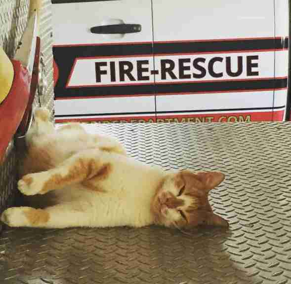 Rescue cat on fire truck