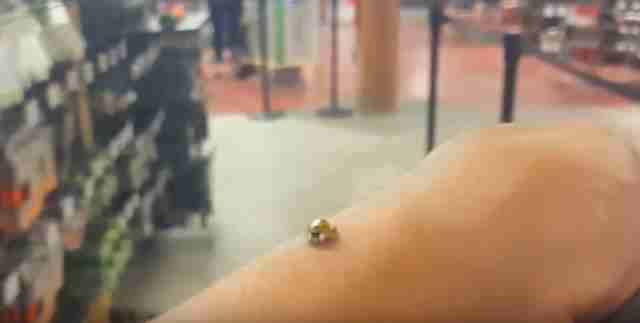 ladybug hangs out with man