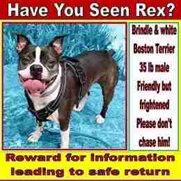 boston terrier missing poster