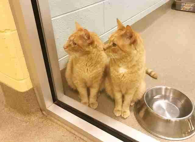 Senior cat brothers at shelter