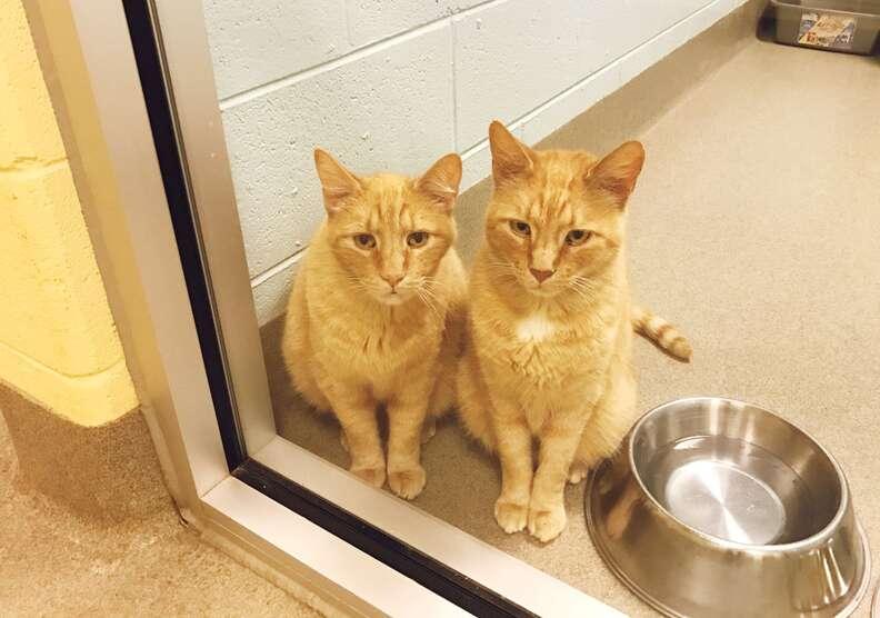 Senior cats left at shelter