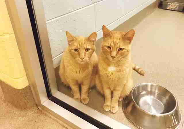 Senior cats left at shelter