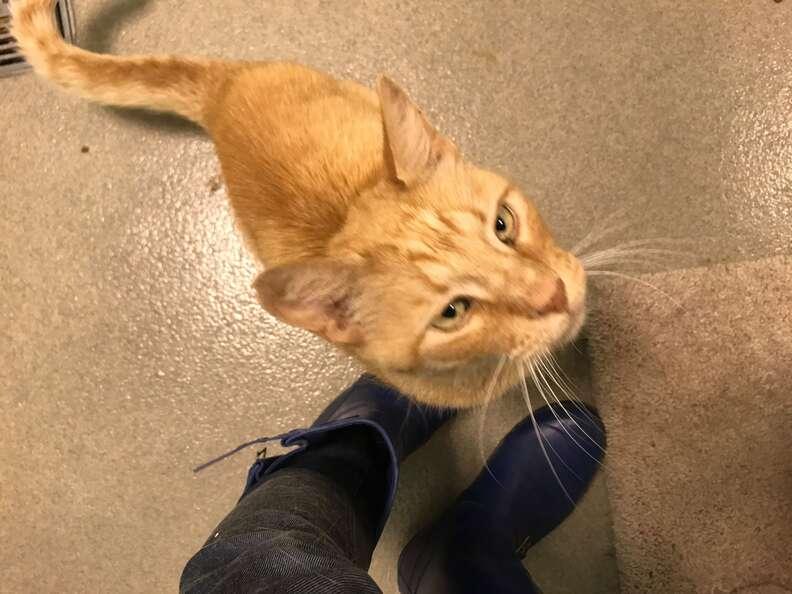senior cat left at shelter