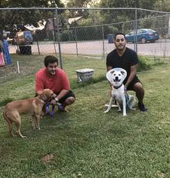 dogs in park with rescuers