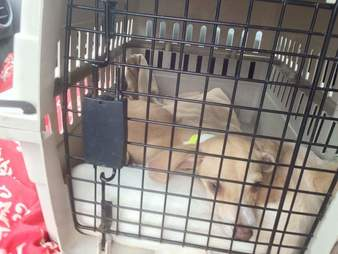 rescue dog in crate