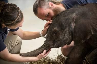 People comforting baby elephant