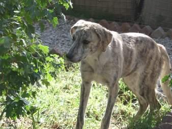 vet saves dog from addiction