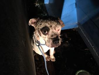 Wounded dog behind dumpster
